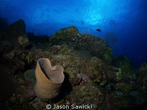 Top of the Cayman Wall by Jason Sawicki 